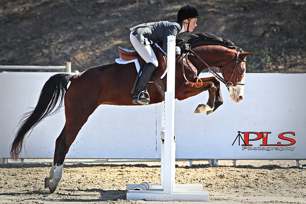 Hunter Jumper 2013